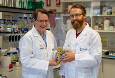 کشف راهی برای افزایش طول عمر آنزیمها