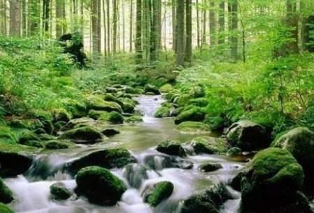 افزایش مساحت جنگلهای اتحادیه اروپا