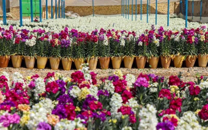 قیمت گل در نوروز ۱۴۰۰ بیسابقهای گران شد