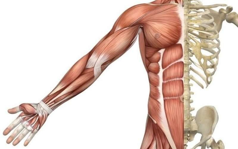 مصرف قند کمتر به ترمیم عضله کمک میکند