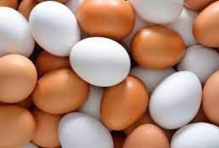 کاهش شدید قیمت تخم مرغ درب مرغداری