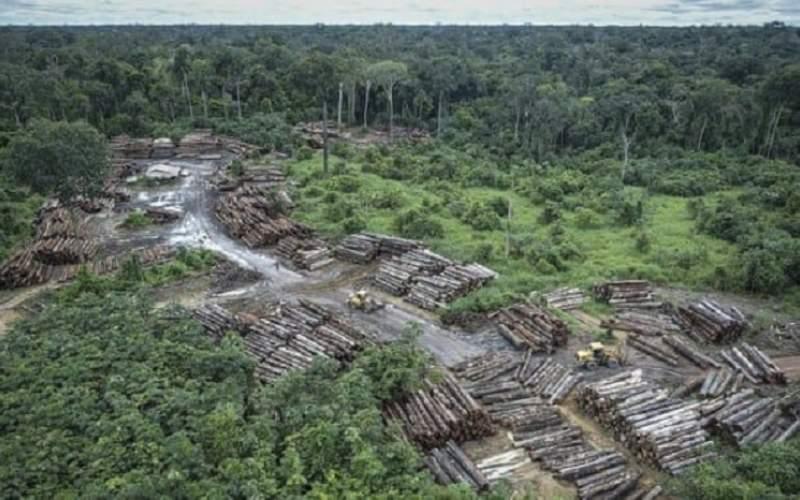 برزیل خواستار کمک برای کاهش جنگل زدایی در آمازون
