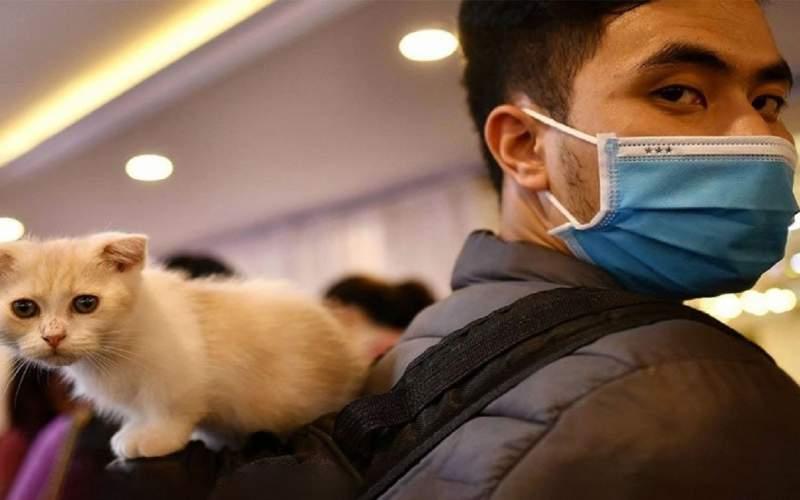 امکان انتقال کرونا از انسان به حیوانات