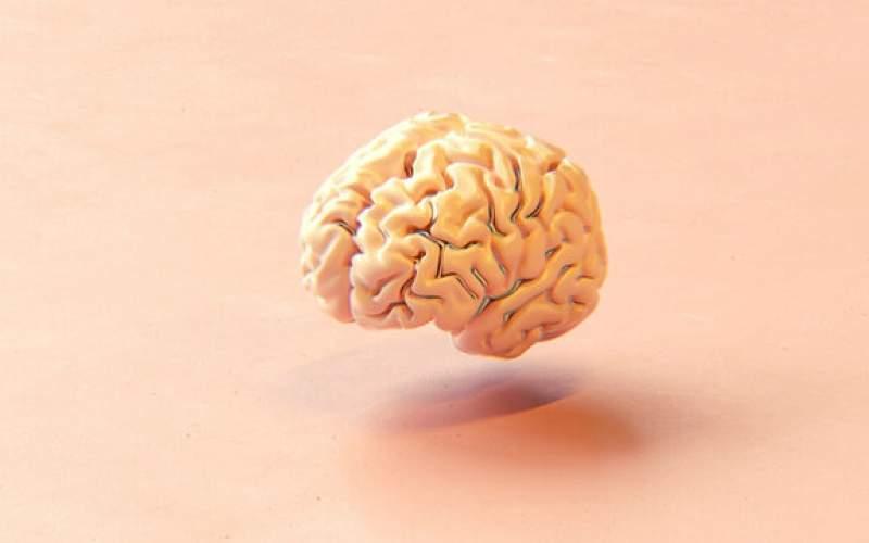 ساخت مغز بوسیله چاپگر ۳بعدی