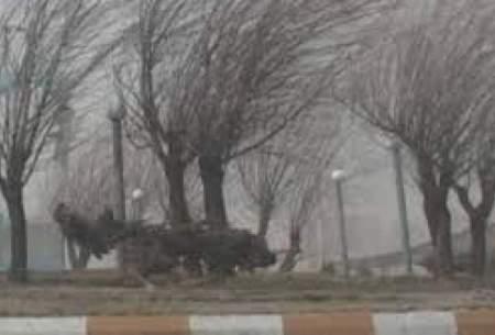 وزش باد و بارش پراکنده در اغلب شهرهای کشور