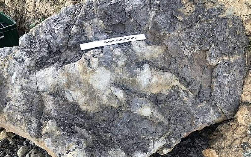 کشف ردپای یک دایناسور غولپیکر!