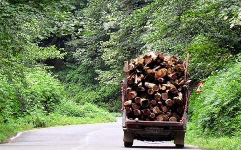 قطع درختان منبع درآمد سودجویان شده است