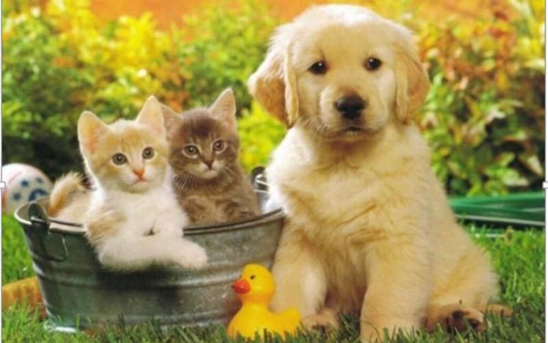 کاهش استرس و افسردگی با حیوانات خانگی