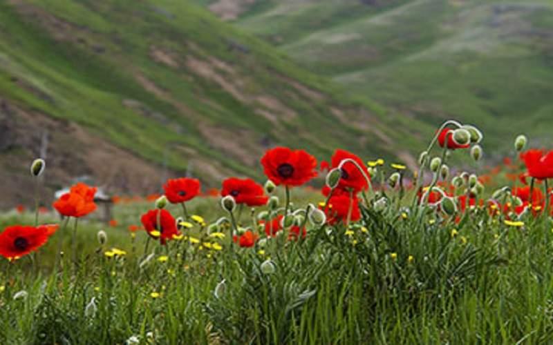 ۴۰۰ گونه نادر از گلهای وحشی دنیا در ایران