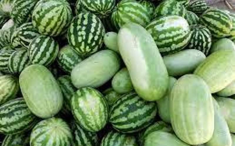 قیمت هندوانه، کیلویی ۱۰هزار تومان شد