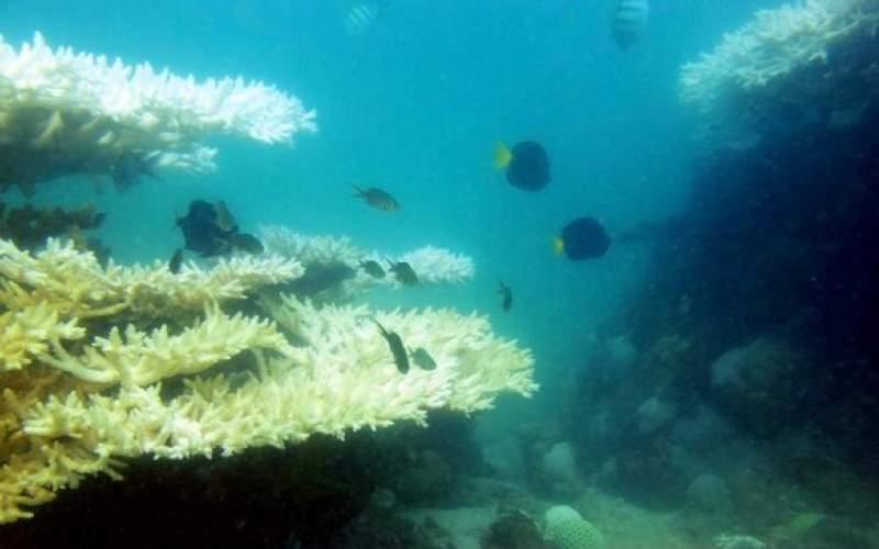 ۳ راهکار برای جلوگیری از مرگ مرجانها