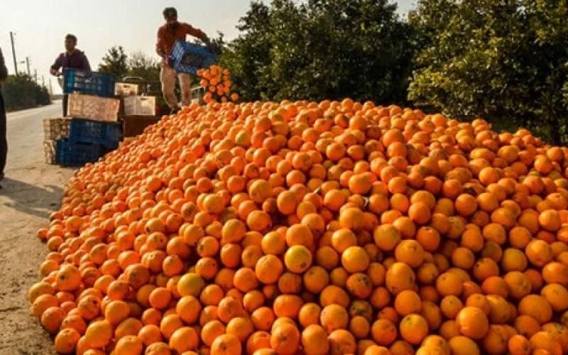 فساد ۳۰هزار تن پرتقال بخاطر تصمیم دولت؟