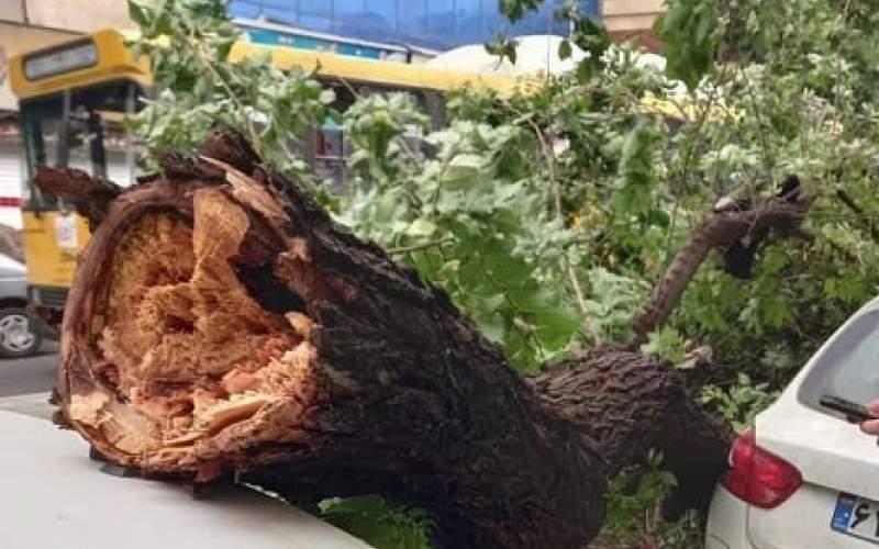 سقوط درختان بر اثر باد شدید در تهران/عکس