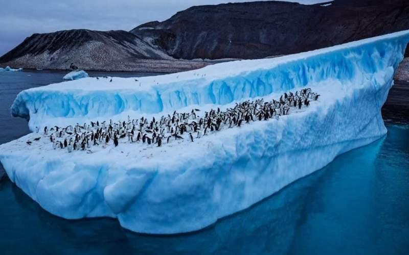 حقایقی شگفت انگیز از قطب جنوب که نمی دانید