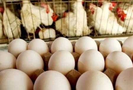 درخواست مرغداران برای خرید تضمینی تخم مرغ