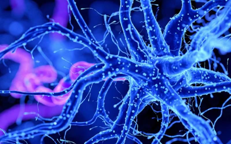 راز حمله  ویروس کرونا به مغز کشف شد