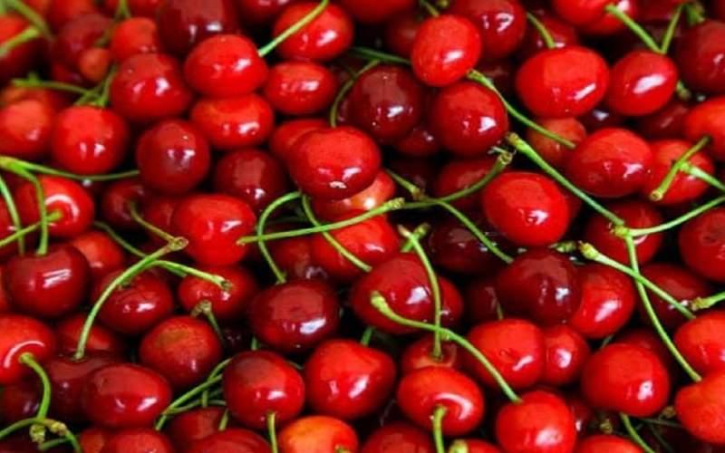 عرضه گیلاس نوبرانه در بازار؛گوجه فرنگی گران شد