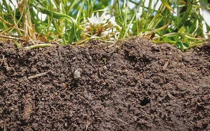 چرا خاک کشور شور شده است؟
