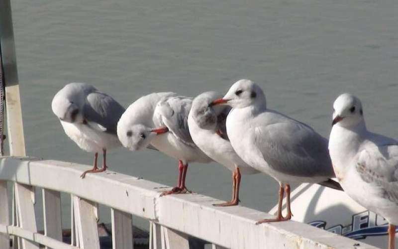 شناسایی و ثبت ٢١٠ گونه پرنده در شهر تهران
