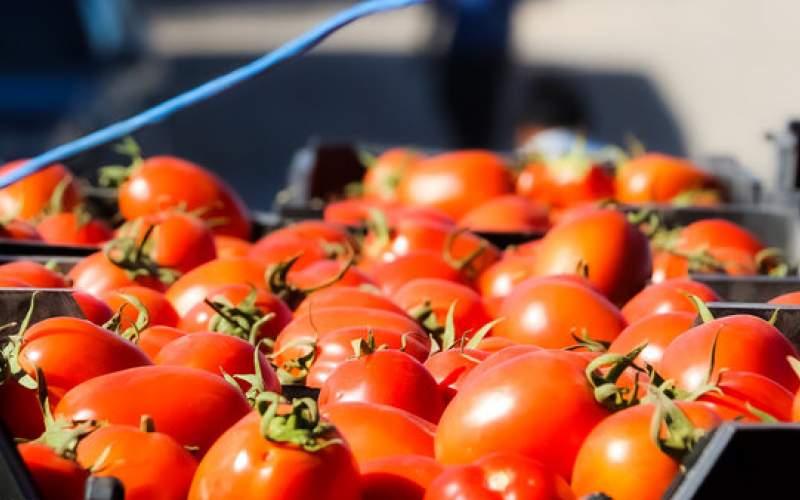 صادرات سبزی و صیفی ۲۲ درصد رشد کرد