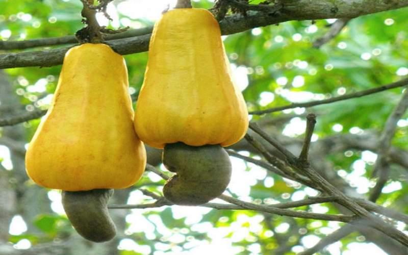 میوههایی که میتوانند برای بدن سمی باشند