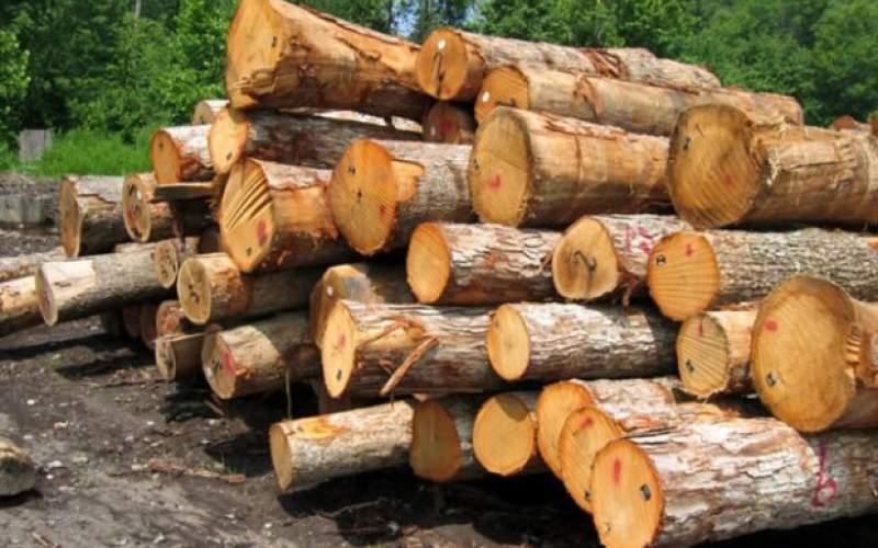 آمار کشف قاچاق چوب نگرانکننده است؟