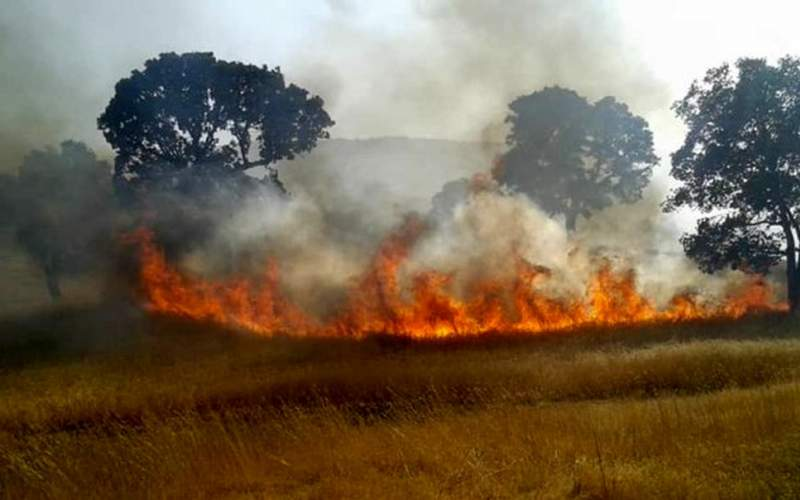 آتش در ارتفاعات باشت مجدد شعله ور شد