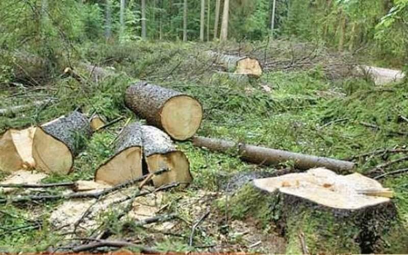 جنگل های استان اردبیل در معرض تخریب انسانی