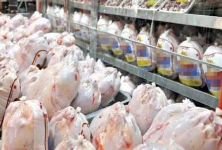 میزان واردات  مرغ به ۱۰۰ هزار تن رسید