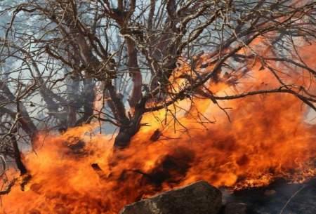 کابوس تلخ سوختن جنگلها کی پایان میگیرد؟