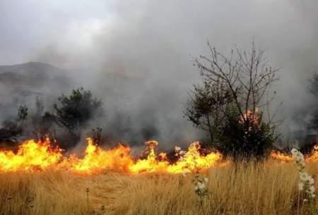 آتش سوزی در جنگلهای سردشت مهار شد