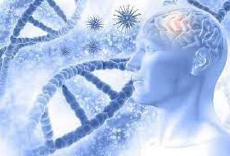 کشف جدید محققان درباره بیماری آلزایمر