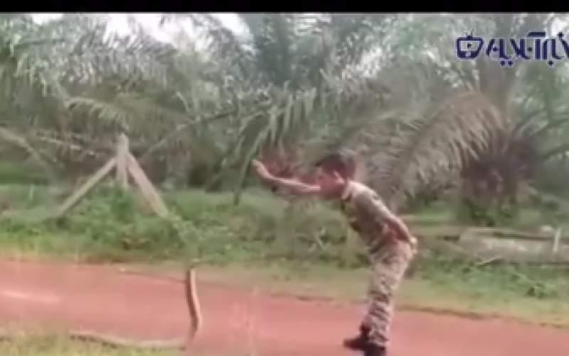ترفند ویژه یک سرباز برای گرفتن مار کبری
