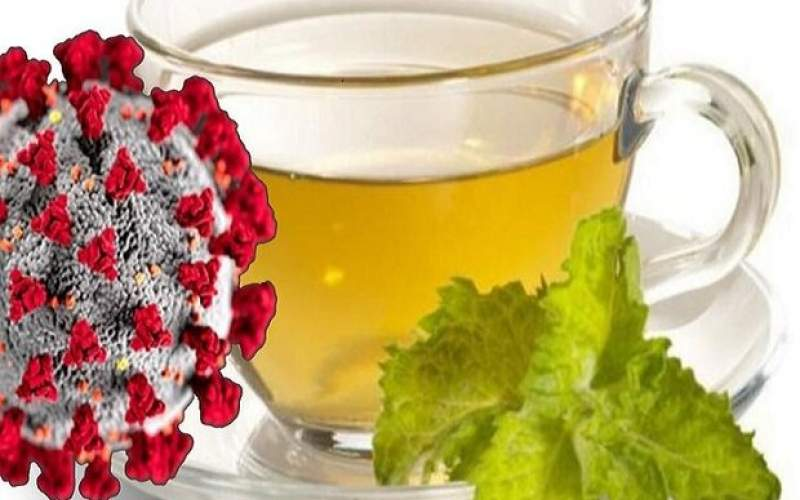 چای سبز در مقابله با کووید ۱۹ موثر است