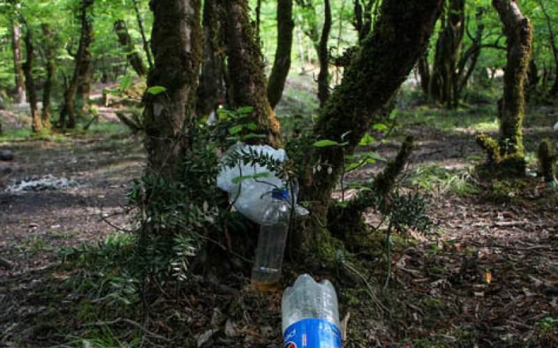 زبالههای رهاشده و آتشسوزی بلای جان درختان