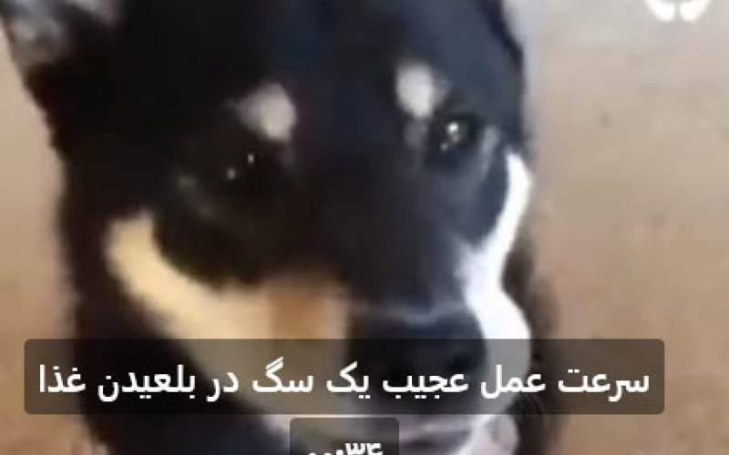 سرعت عمل عجیب یک سگ در بلعیدن غذا