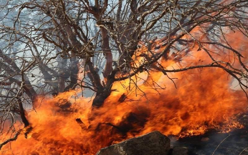 آتشی که در فصل گرما به جان جنگلها میافتد