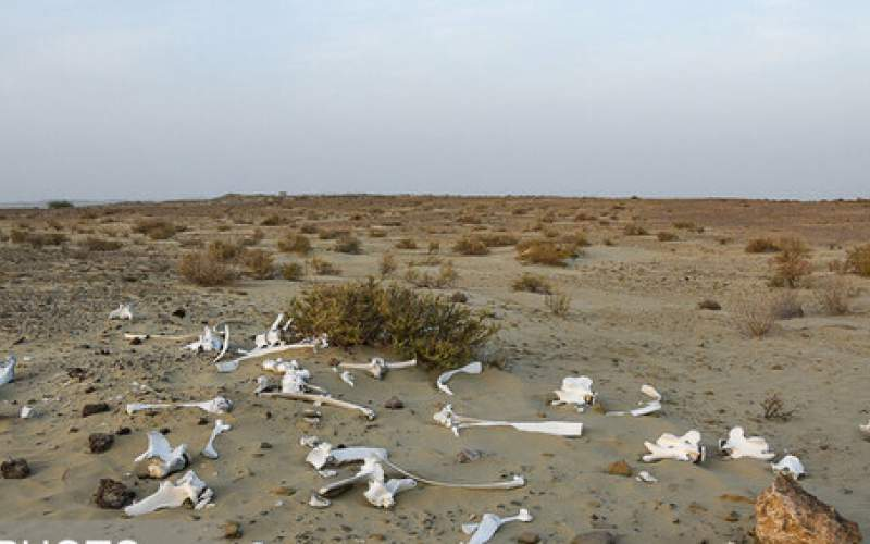 هشدار نسبت به وقوع مرحله حاد بحران آبی
