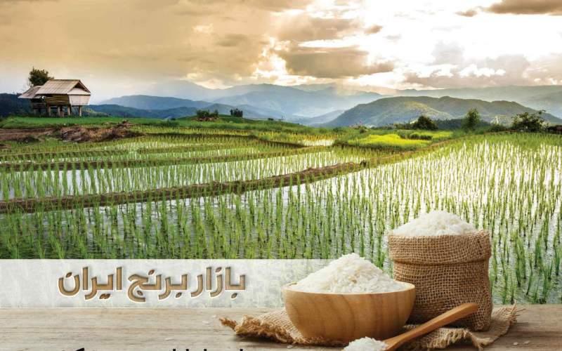رفع موانع تولید در تنها بازار تخصصی برنج ایران