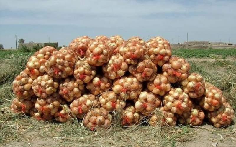 تولید ۶۰۰ هزار تن پیاز مازاد در سال جاری
