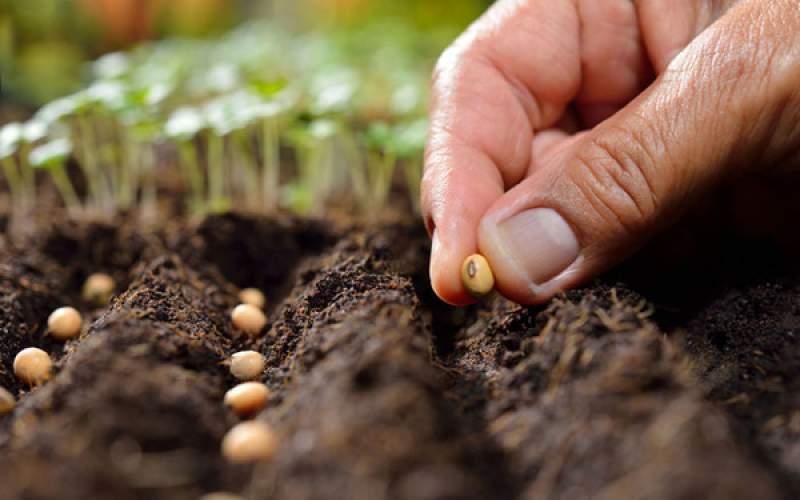 خطر افتادن بازار بذر به دست دلالان