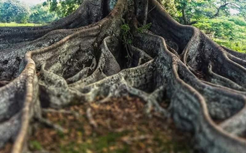 آیا میدانستید که درختان مغز دارند؟