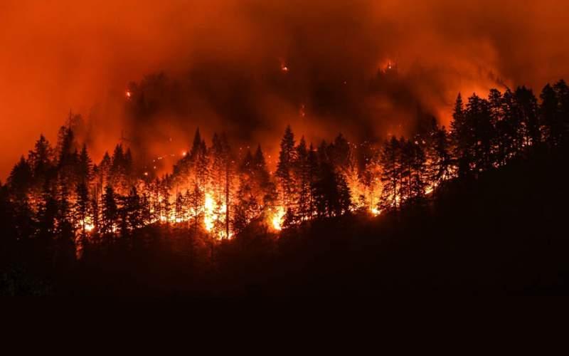 آتشسوزی جنگلها با کمک سازمان جنگلها!