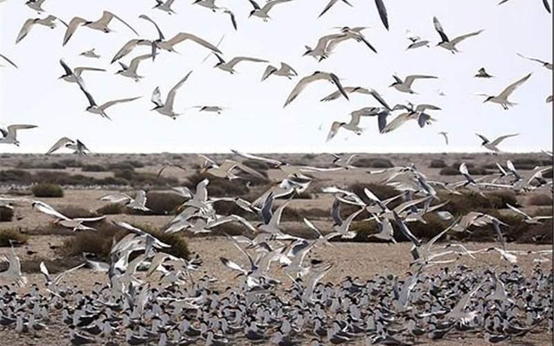 استان بوشهر با کمبود ۱۰۰محیط بان مواجه است