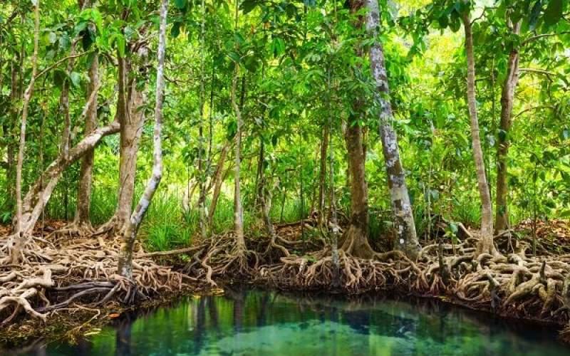 تصفیه آب با الهام از درختان جنگلهای حرا
