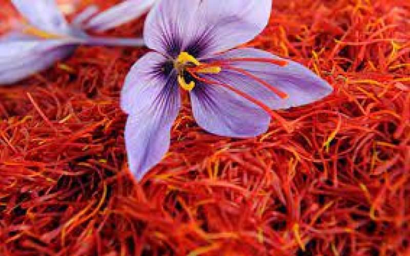 فروش زعفران به یک هشتم تا یک دهم قیمت