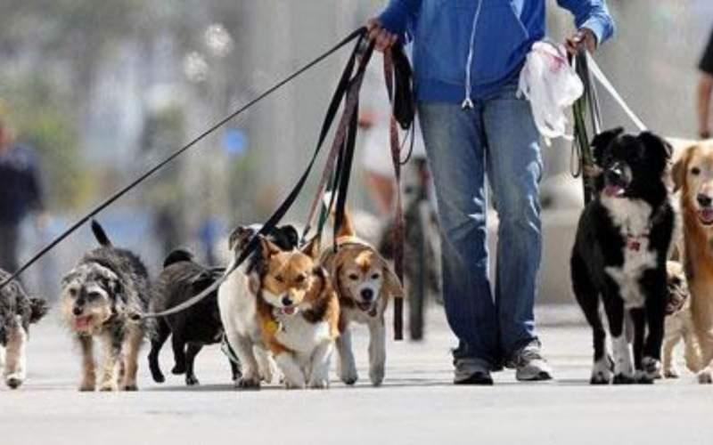 مصوبهای درباره ممنوعیت سگ گردانی نداریم