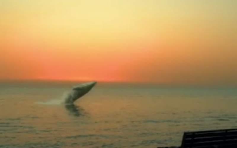 ماجرای حضور نهنگ در ساحل بوشهر چه بود؟