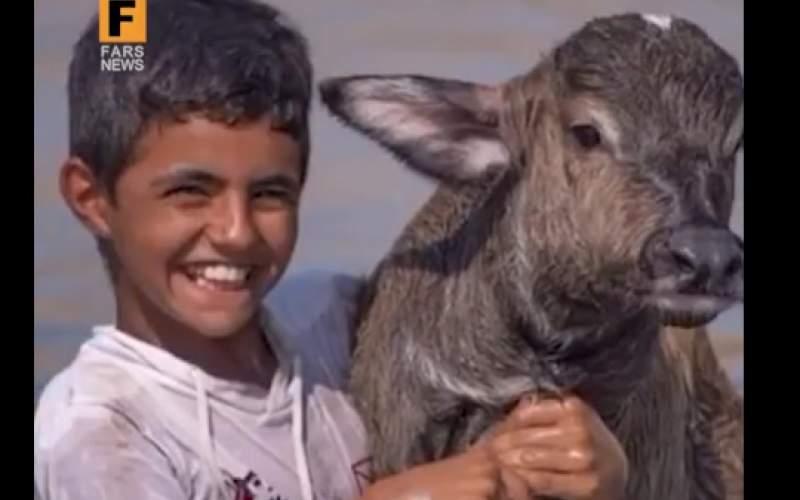 شادی نوجوان خوزستانی از نجات گاومیشها