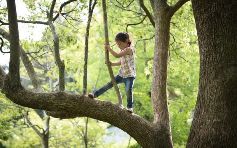 تاثیر درختان بر رشد و تکامل مغز کودکان